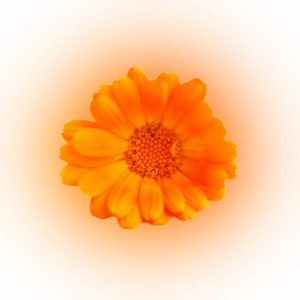 Orange Flower by Ronnie Stone