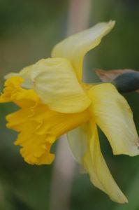 Sombre Narcissus by Missjazzpiano