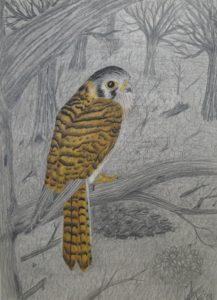 Hungry little Bird by Paul Teed