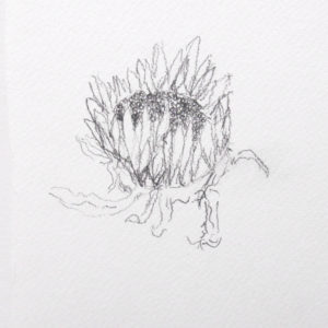 Sunflower by Simona Hartia