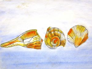 Shells by Nadean Stewart