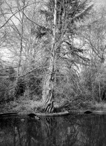Ducks in a pond by mumamafia