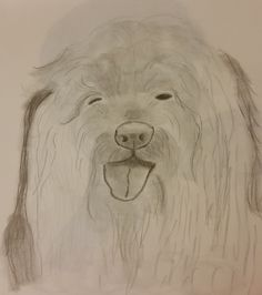 Old english sheepdog by Jade's Gallery