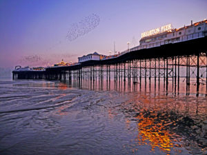 Brighton Beach Low Tide Sunset by Sarah Harris