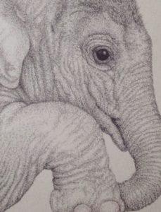 Elephant by Nic Hopkins