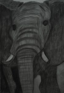 Elephant with tusks. by Debbie Moore