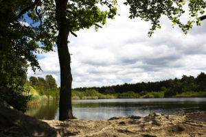 Esher Common by Lewis Jenkins