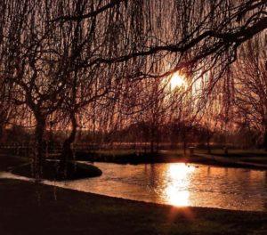 Sunlight by LouiseTopp