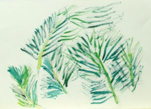 Ferns by Ali