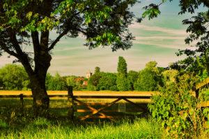 Across the field by LouiseTopp