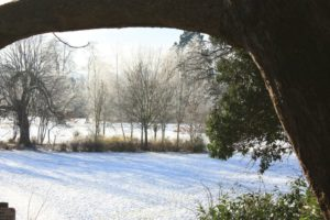 Frozen fog in the park by Mazz