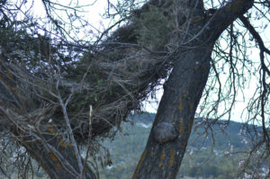 nest – another view by gaynor rees