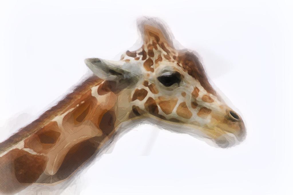 35022 || 5364 || African Animals - a giraffe || NULL || 7875