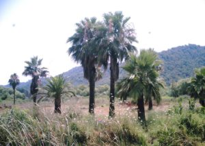 Gocek farmlands by mumamafia