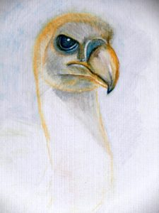 Griffin Vulture by The Price of Oil