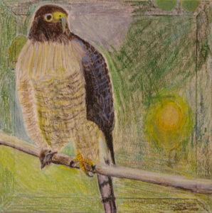 Hawk by Robert McCamley