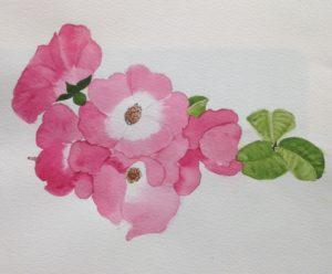 The rambling rose by Samantha Gamage