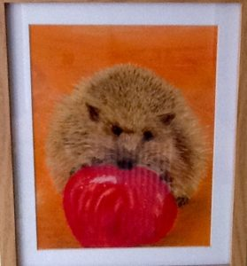 Hedgehog with Apple by Bristol Balloons