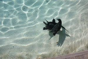 swim by Nicky