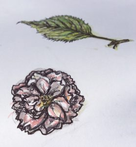 Flower study by Lucy Harding