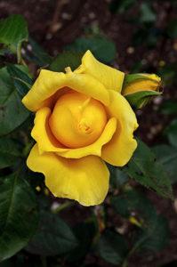 Tie a yellow ribbon by LouiseTopp