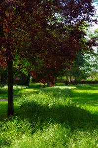 Open Meadow by LouiseTopp