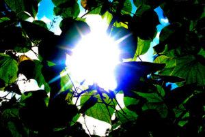 INTO THE LIGHT by Photony
