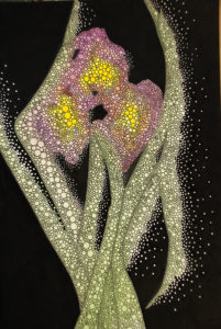 Iris by John Lincoln