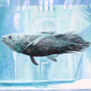 Coelacanth (Latimeria chalumnae) by John Henry Thomas