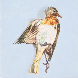 Robin (Erithacus rubecula) by John Henry Thomas