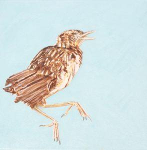 Jay Chick (Garrulus glandarius) by John Henry Thomas