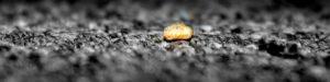 My Dirty Secret: Lone Rice Krispie by Kristina Veasey