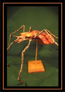 Insect species by Kuriologist