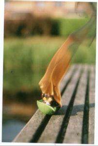 Ladybird fire by Lynsey Cosham