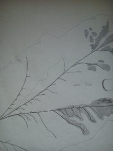 Leaf Detail by Macktee