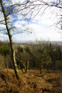 Leith Hill by Lewis Jenkins