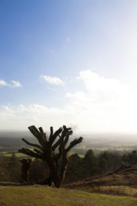 Leith Hill Summit by Lewis Jenkins
