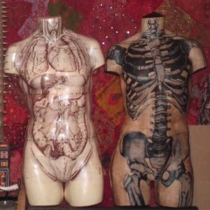Anatomical Body Wall Hanging Decoupage Paper Mache by Kuriologist