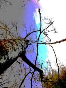 Like A Tree I Look Up by G.E.W. Shepherd