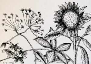 Sunflower by Liz Innes
