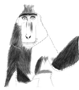 macaque by fox