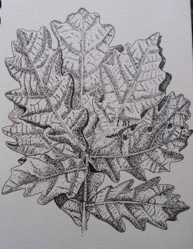 9016 || 2430 || oak leaves || If you intend to put this work up for sale || 4906