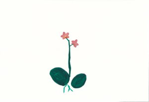 orchid_1 by ellen
