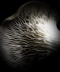 oyster by Ann Hardcastle