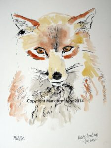 fox by Shoreham by Sea