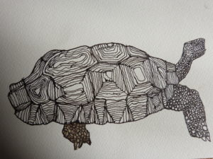 Tortoise by Connor V