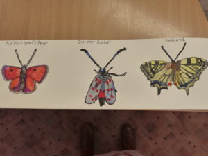 A flight of Butterflies by Connor V