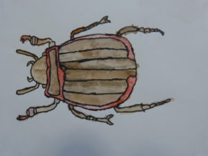 Beetle by Connor V