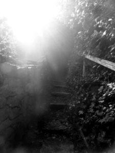 Secret Passage by Isabelle McGowan