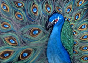 Peacock by Isabelle McGowan